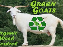 Green-Goats-Bus-Card-600-px.jpg